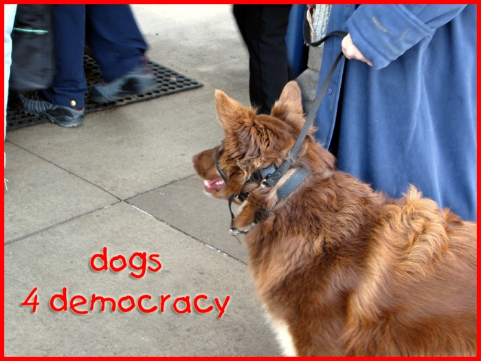 This dog is ready to march: dogs 4 democracy