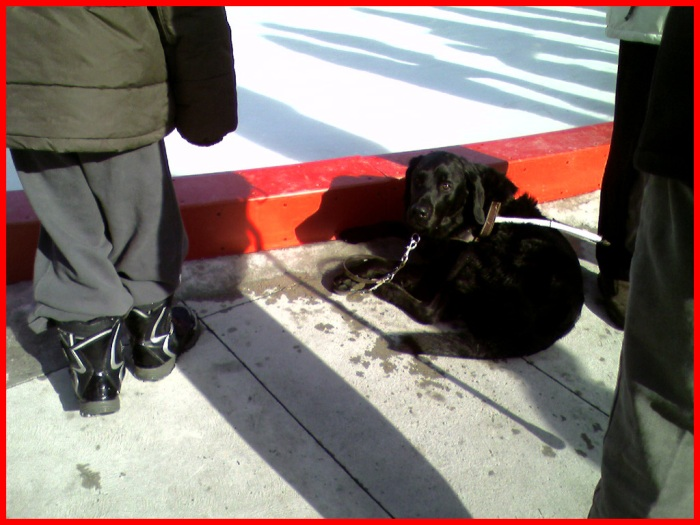 A dog is curled up beside the ice rink at the Waterloo rally.