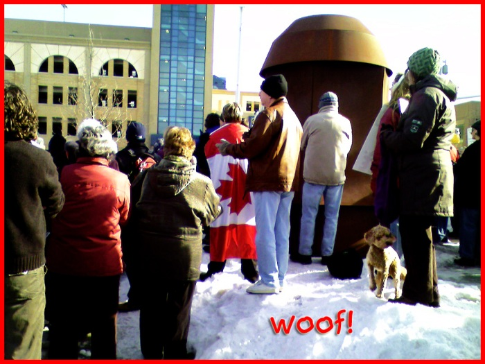 A fluffy brown dog is enjoying the outing with the crowd of protesters.