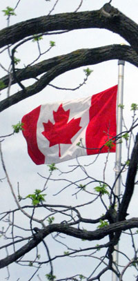Canadian Flag through tree