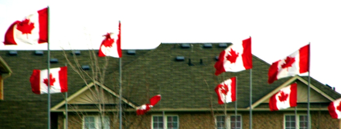 Canadian flags fly