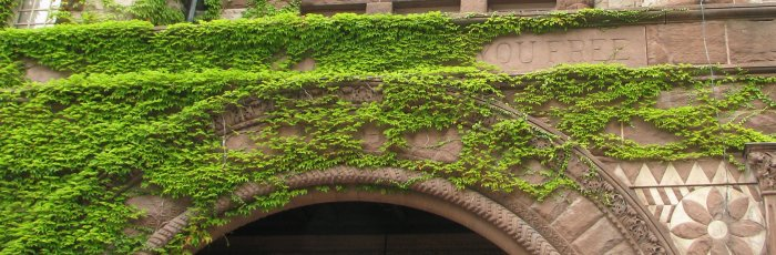 Ivy coloured archway at the University of Toronto