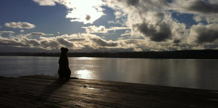 A dog is silhouetted on the deck, staring off across the water